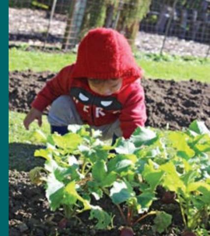 A child with a red hood leans over sprouting radishes in a garden.